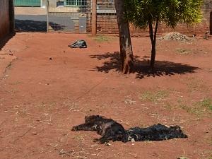 Três cães de uma mesma família morreram após passar mal (Foto: Felipe Turioni/G1)