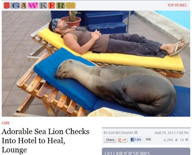 Site mostra imagem do que seria a leão-marinho Chonchita dormindo à beira da piscina do hotel de Galápagos (Foto: Reprodução/Gawker)