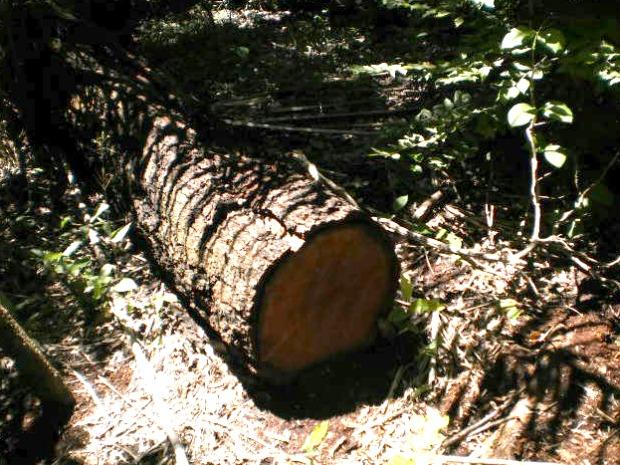 PMA multa fazendeira em 80 mil por derrubada ilegal de madeira (Foto: Divulgação/PMA)