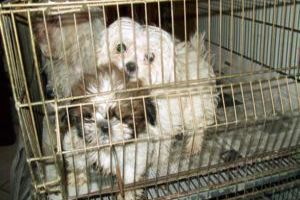 Animais eram mantidos sem autorização da Vigilância Sanitária. (Foto: Vigilância Sanitária/ fotos cedidas )