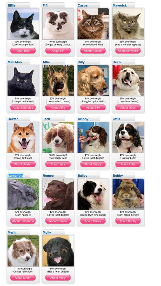 Dezoito animais obesos foram selecionados para participar de uma competição. (Foto: Reprodução/PDSA)