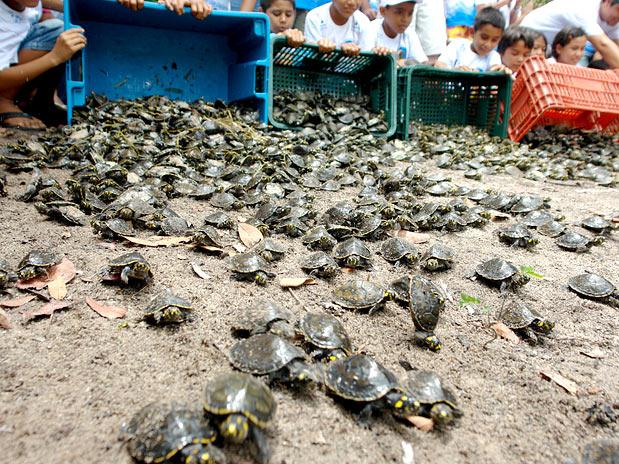 Projeto é feito na tentativa de evitar o contrabando da carne das tartarugas (Foto:  Assessoria /Sedraf-MT)