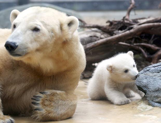urso anori (Foto: Oliver Berg/AFP)