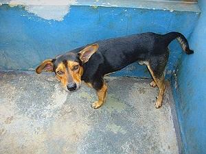 Fotos de cães para adoção estão no site da Prefeitura (Foto: Divulgação)