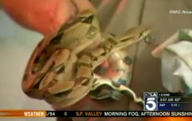Policial segura cobra encontrada na casa. (Foto: Reprodução)