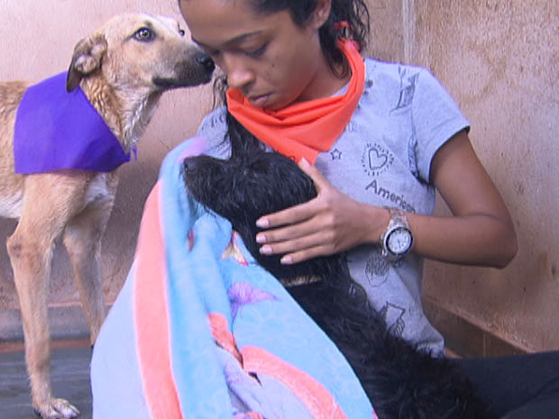 No trote do bem dos calouros de veterinária da UnB, o carinho e as doações de ração e itens de limpeza foram acompanhados por banho nos bichos. (Foto: Reprodução/TV Globo)