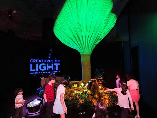 Uma exibição do Museu de História Natural de Nova York traz criaturas luminescentes da natureza, ou espécies que emanam luz própria. Aqui um cogumelo, em escala 40 vezes maior.  (Foto: AMNH D. Finnin )