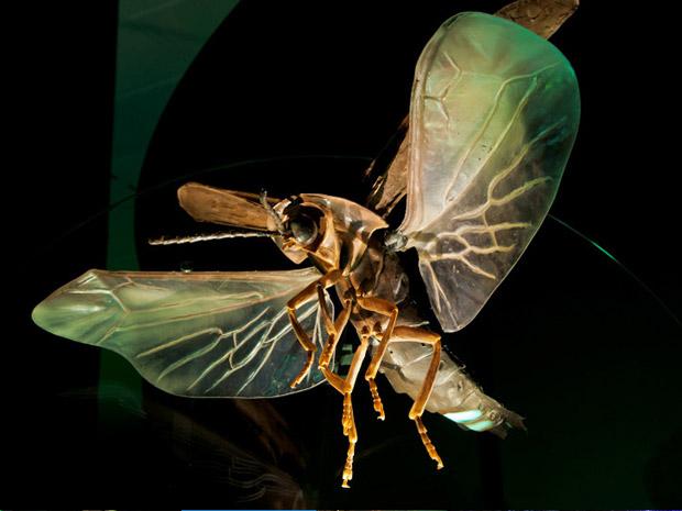 """Este vagalume foi construído em escala 65 vezes maior que seu tamanho na natureza. O phausis reticulata, encontrado nos EUA, é conhecido no país como """"fantasma azul"""". Sua luz oscila enquanto voa, a até 60cm do solo procurando por fêmeas, que não voam. (Foto: AMNH D. Finnin )"""