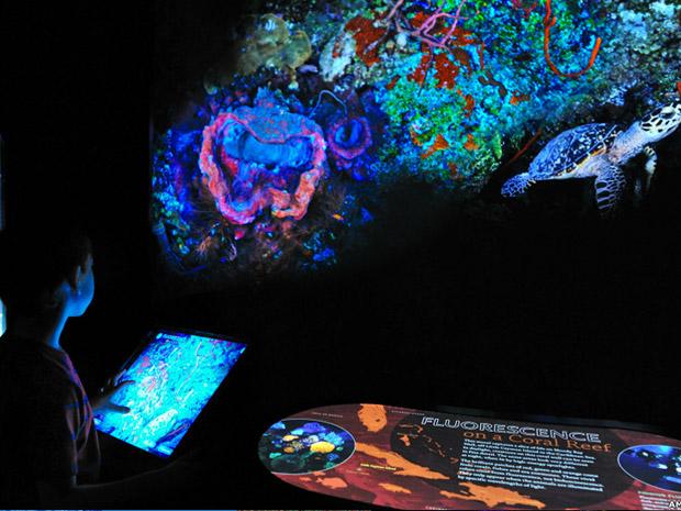 Esta imagem interativa recria um coral da costa das Ilhas Caimã, habitat de muitas espécies bioluminescentes e biofluorescentes.  (Foto: AMNH D. Finnin )