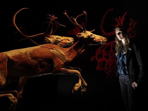 """Dupla de renas é exposta na """"Animal Virado do Avesso"""", em Londres. (Foto: Reuters / Stefan Wermuth)"""