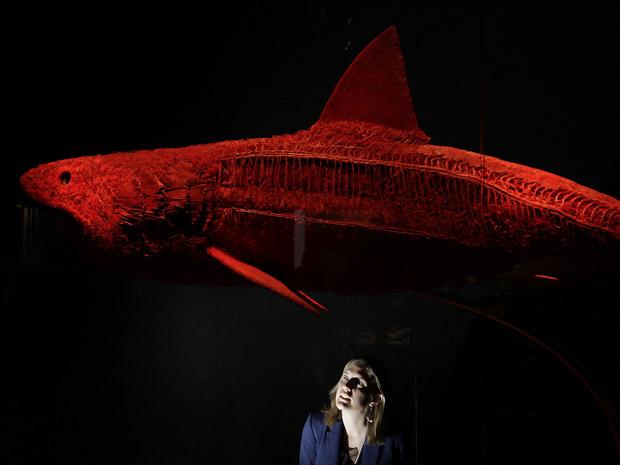A anatomia de um tubarão também faz parte da exposição, em Londres. (Foto: Reuters / Stefan Wermuth)