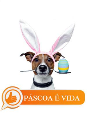 Campanha arrecadará rações e medicamentos para animais abandonados em Manaus (Foto: Divulgação)