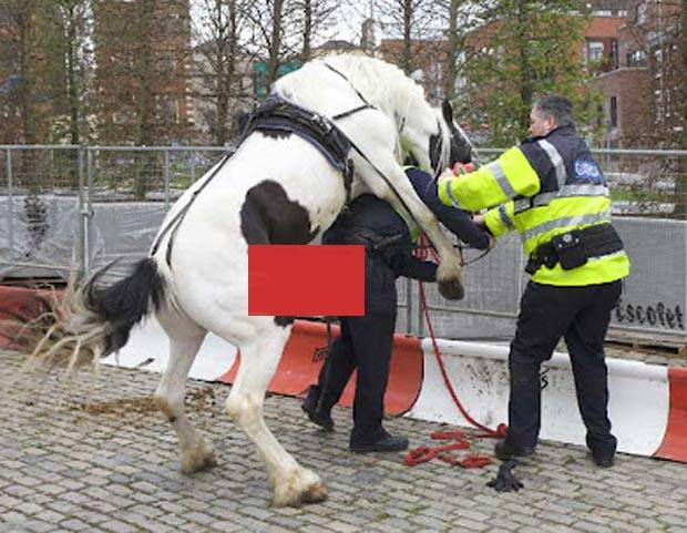 Reprodução de vídeo mostra cavalo 'tarado' atacando policial na Irlanda. (Foto: Reprodução/YouTube)