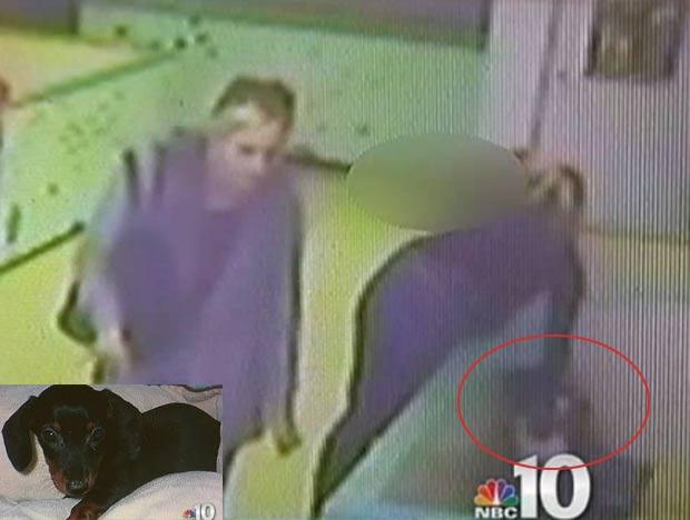 Mulher foi flagrada roubando cãozinho em uma loja de animais. (Foto: Reprodução)