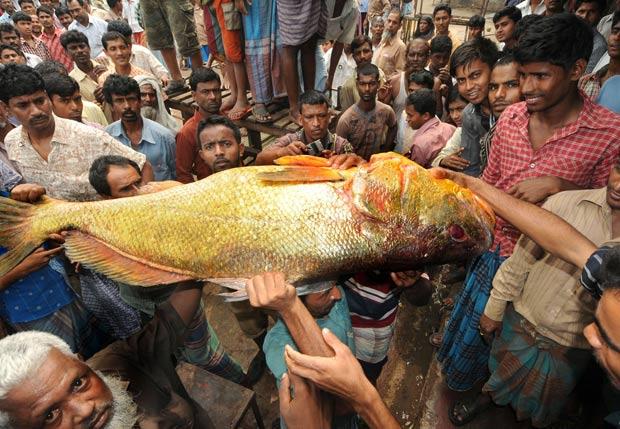 Peixe foi vendido por US$ 40 mil na Índia. (Foto: AFP)