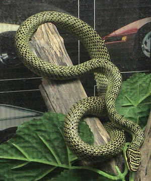 A cobra (Foto: LA Dawson/Licença Creative Commons)
