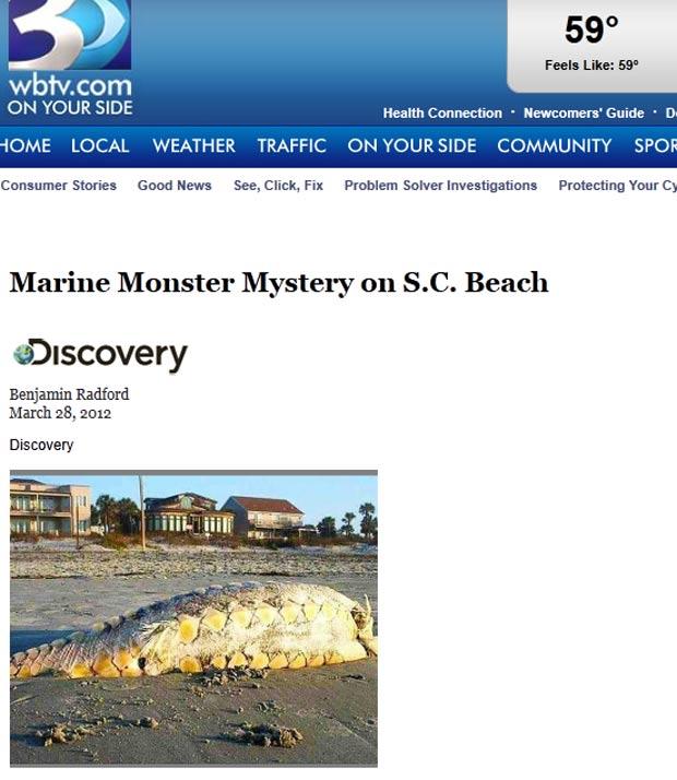Criatura foi encontrada em uma praia em Folly Beach. (Foto: Reprodução)