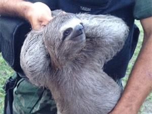 Animal corria risco de morrer eletrocutado (Foto: Walter Paparazzo/G1)