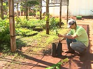 Funcionário cuida de mudas no viveiro municipal de Viradouro, SP (Foto: Reprodução/EPTV)