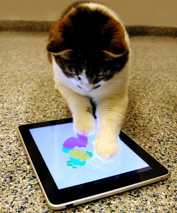 """Um gato cria uma """"pintura"""" no aplicativo Paint for Cats, para iPad, que é voltado para que os animais também possam fazer pinturas no tablet. O abrigo de animais SPCALA decidiu converter os desenhos em cartões e vendê-los para arrecadar recursos, segundo  (Foto: SPCALA/Associated Press)"""