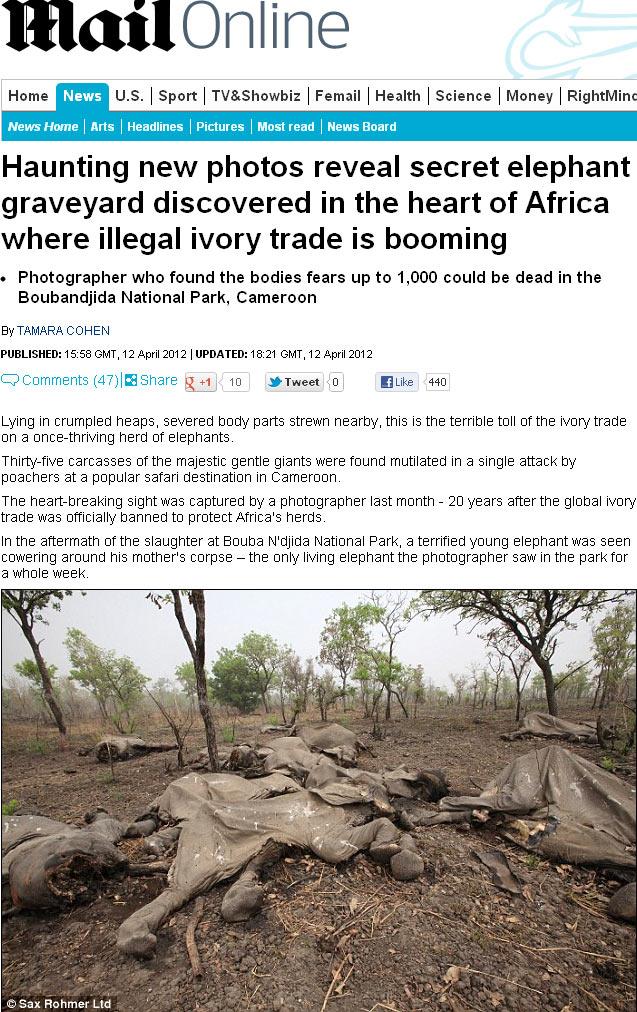 Na imagem, ao menos 35 carcaças de elefante foram encontradas em parque de Camarões. Animais são mortos para retirada do marfim, comercializado ilegalmente no país. (Foto: Reprodução)
