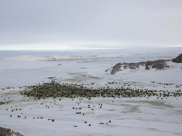 Colônia de pinguins-imperador vista de longe (Foto: Reuters/Martin Passingham)