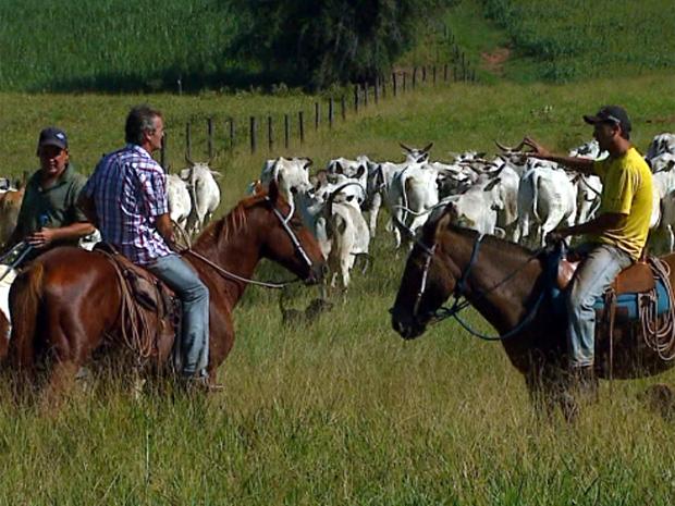 Fazenda onde nove bois morreram com raiva em Descalvado (Foto: Reprodução/EPTV)