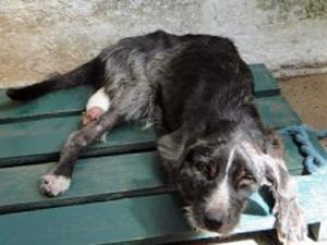 Cachorro ganhou o nome de Náufrago (Foto: Reprodução/TVTribuna.com)