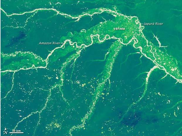 O mapa produzido por Marc Simard e seus colegas da Nasa tem maior resolução espacial do que o primeiro e consegue mostrar mais detalhes. A várzea, por exemplo, é um tipo de floresta que frequentemente é inundada por água fresca e tende a ser menor do que a floresta ao redor, visível entre os rios Amazonas e Japurá como um tom de verde mais claro. (Foto: Nasa)