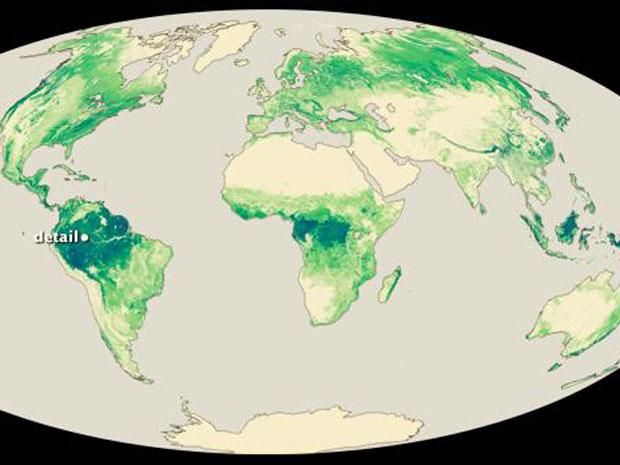 Uma equipe da Nasa desenvolveu um mapa que mostra as principais florestas no mundo vistas do espaço através do satélite Icesat. As destacadas em verde escuro são as mais altas, ou seja, que têm cume maior do que 40 metros. São elas: Floresta tropical da Amazônia e as florestas tropicais da África Central e da Indonésia.  (Foto: Nasa)