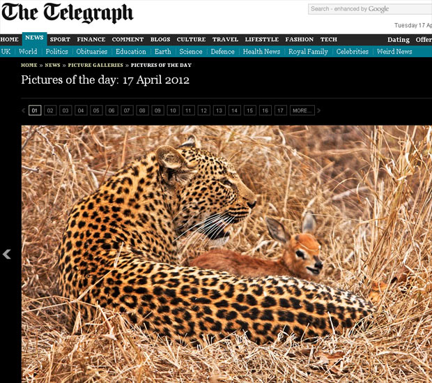 """Imagem mostra leopardo abraçado a filhote de antílope, na África do Sul. O """"carinho"""" do felino ao pequeno mamífero durou quase uma hora, até que ele abocanhou o antílope. (Foto: Reprodução)"""