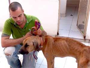 Cão espera por transfusão de hemáceas (Foto: Planetvet)