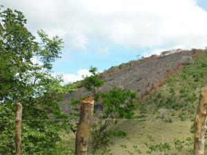No local, já havia outras áreas desmatadas (Foto: Divulgação / Polícia Militar)