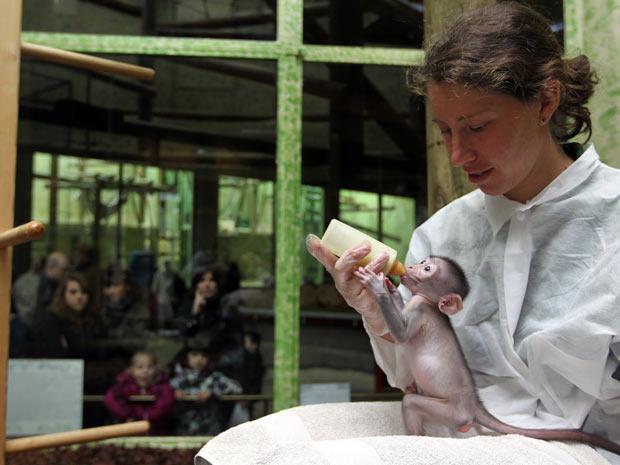 Funcionária do zoológico Jardin des Plantes, em Paris, na França, alimenta o macaco mangabei Loango, que nasceu em 5 de março e foi rejeitado pela mãe. (Foto: Kenzo Triboillard/AFP)
