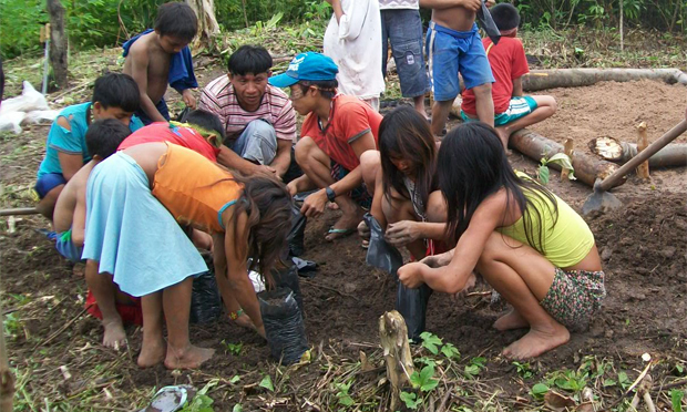 Crianças da tribo Arara Shawãdawa em atividade na horta da aldeia (Foto: Divulgação/Comissão Pró-Índio do Acre)