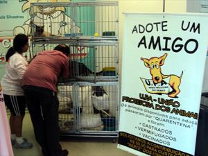 Feira de adoção reúne animais abandonados em Campinas, SP (Foto: Divulgação / UPA)