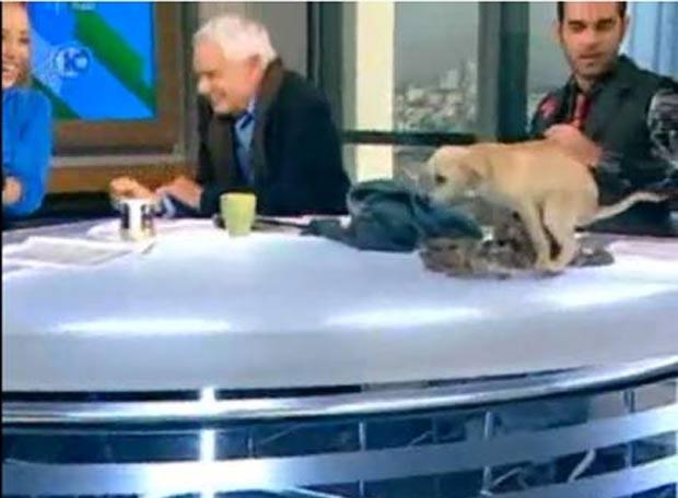 Em 2009, um filhote de cachorro protagonizou uma cena inusitada durante um programa ao vivo da emissora de TV israelense Canal 10. O cãozinho fez cocô em cima da bancada, provocando gargalhadas dos participantes do programa. (Foto: Reprodução)