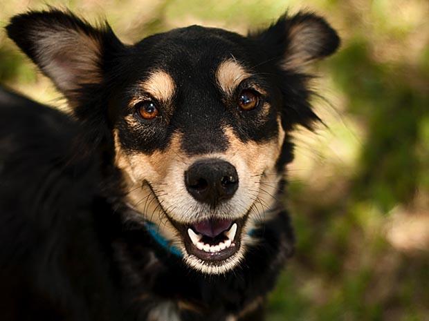 Animais para adoção ganham fotos profissionais em Ribeirão Preto, SP (Foto: Divulgação / Mariana Simon)