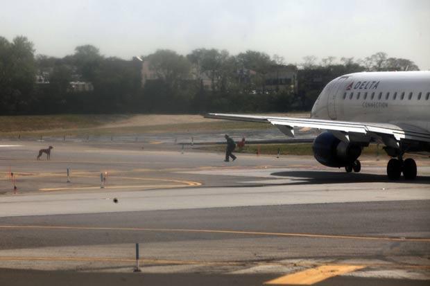 Fuga provocou a interrupção do tráfego de aviões no aeroporto enquanto funcionários perseguiam o animal. (Foto: Spencer Platt/Getty Images/AFP)