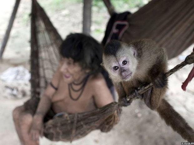 Amerintxia com seu macaco de estimação. A tribo mantém uma ligação próxima com a fauna, adotando macacos órfãos, que são incorporados às famílias. Mulheres Awá chagam a os amamentar.  (Foto: Survival/BBC)