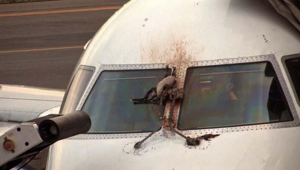 Foto feita após o pouso mostra os restos de um dos gansos atingidos pelo avião nesta terça-feira (24) (Foto: AP)