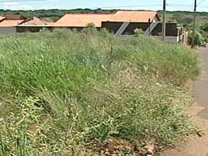 Moradores reclamam de mato em áreas públicas em Ituiutaba (Foto: Reprodução/TV Integração)