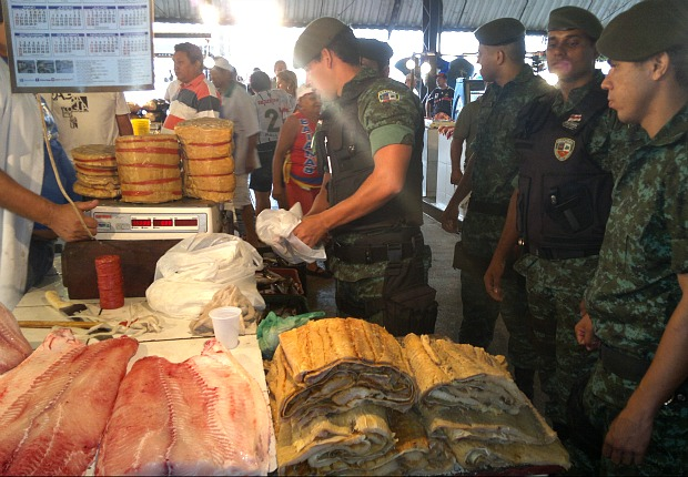 Pescado será doado a instituições carentes (Foto: Reprodução/BPAMB)
