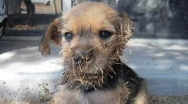 O cãozinho Cactus Jack (Foto: BBC)