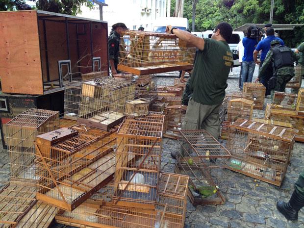Ibama apreende aves em João Pessoa (Foto: Walter Paparazzo/G1)