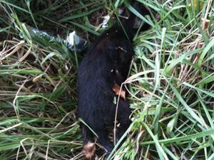 Cachorro espancado até ser morto em Goiânia (Foto: Divulgação/Polícia Militar)