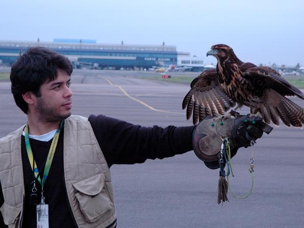 Infraero usa falcão para evitar choques de aves com aviões no RS (Foto: Leonardo Tortorelli / Divulgação, Infraero)
