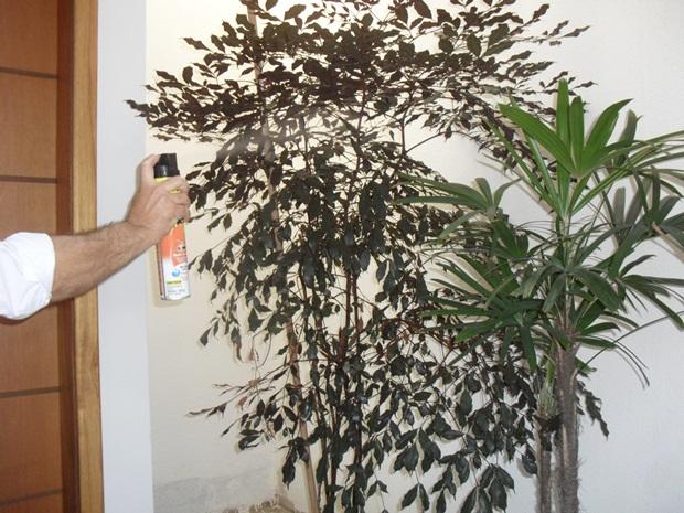 Consultor aplicou veneno para tentar eliminar os pernilongos (Foto: Maria Valéria Gonçalves)