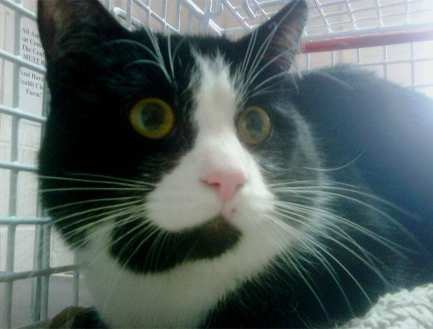 Gato caiu de uma altura de seios metros em Bathgate, na Escócia. (Foto: Divulgação/Scottish SPCA)