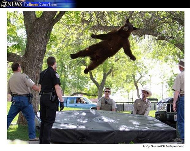 Urso Voador